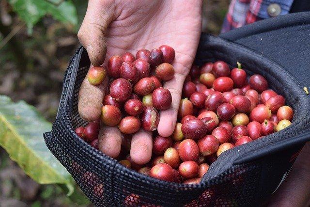 indonéská káva.jpg