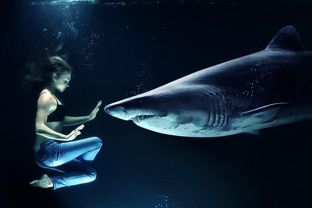 žralok.jpg